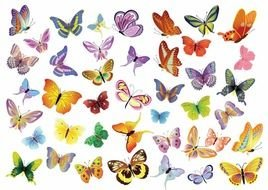 Butterfly Graphics drawing
