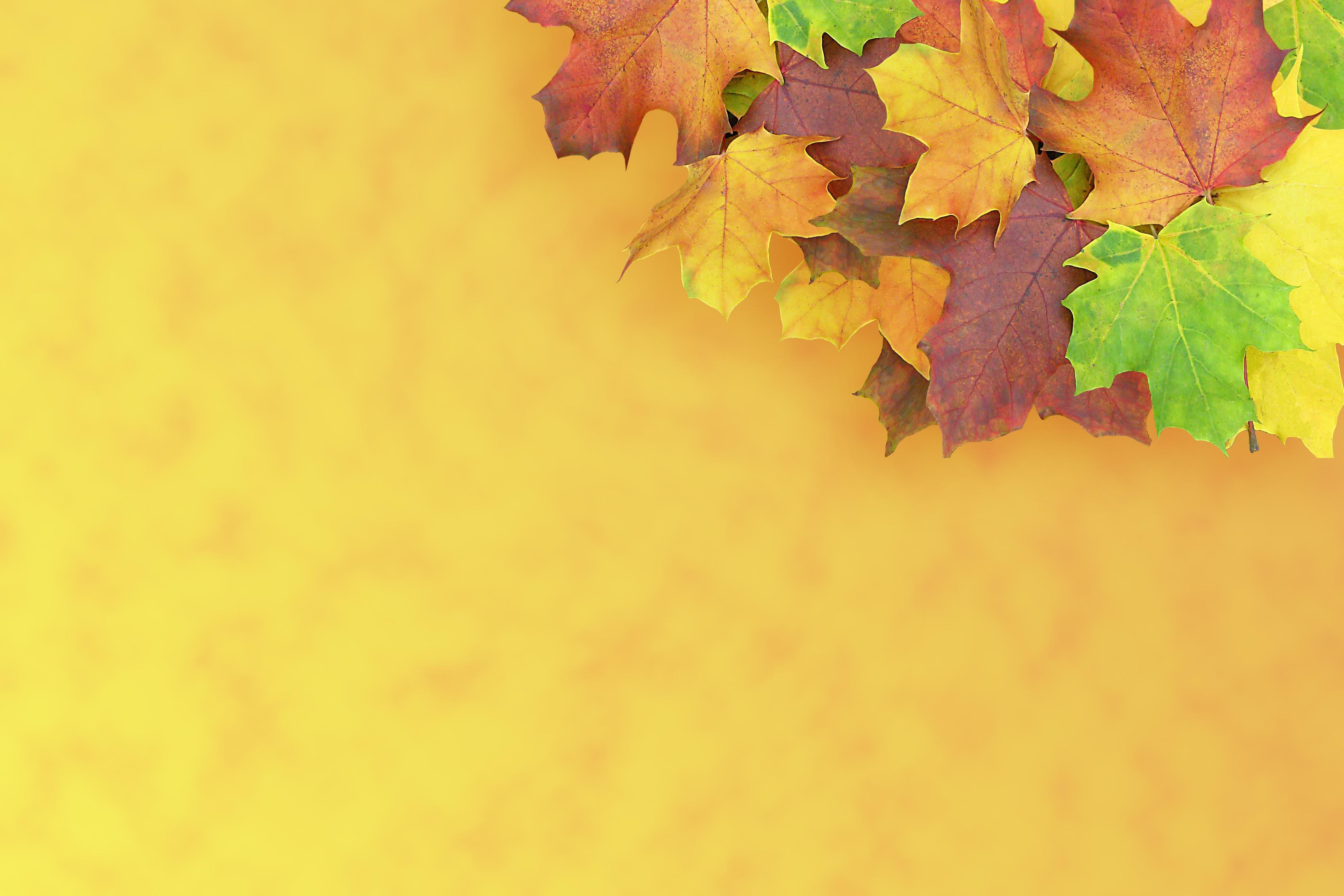 Смешные, шаблон открытки осенние листья