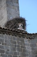 bell tower with nest stork