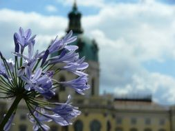 purple flower on a background of the palace in Germany