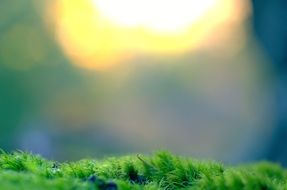 moss vegetation bokeh background