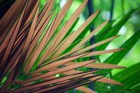 dry palm in tropics