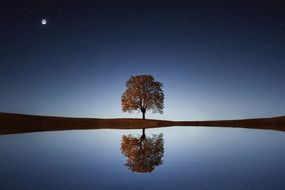 lonely tree at twilight
