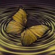 butterfly insect wave concentric
