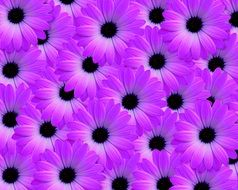 bright purple flowers
