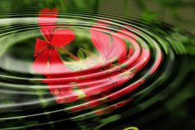 geranium wave water rings circle