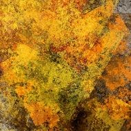 abstract wallpaper background autumn leaves