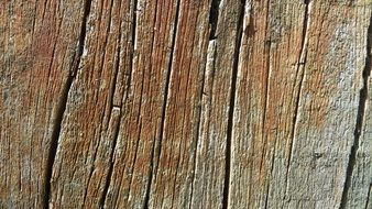 wood nature texture
