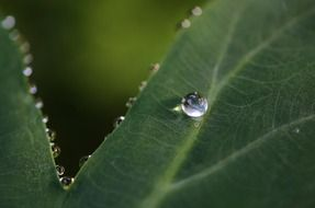 photo of dew on the leaves of plants