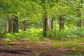 forest woods woodland trees nature