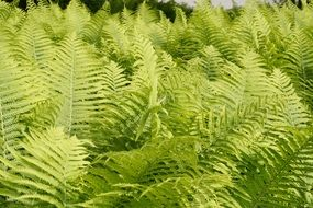 green fern bushes