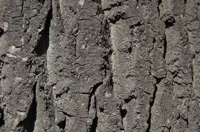 gray texture of tree bark