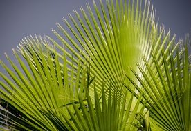palm leaf in sunny day