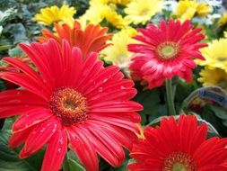 flowers red yellow nature beauty