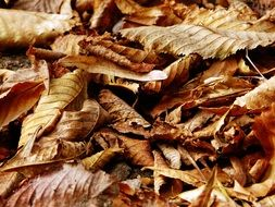 dry brown autumn leaves