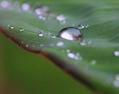 drops of rain water on the green leaf