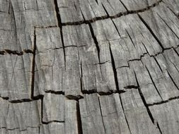 wood texture nature