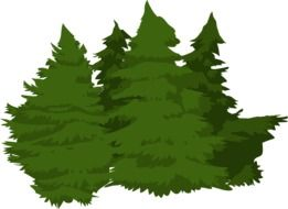 trees woods pines greenery leafy