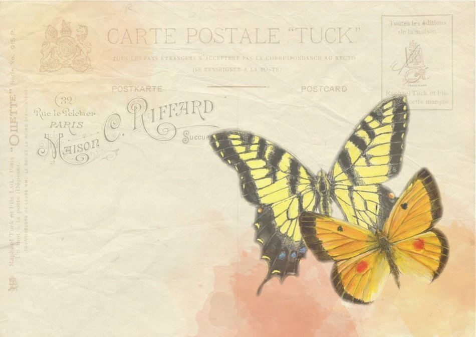 butterfly background post postcard