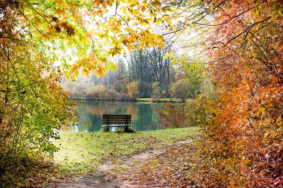 autumn fall backgrounds colorful landscape pond