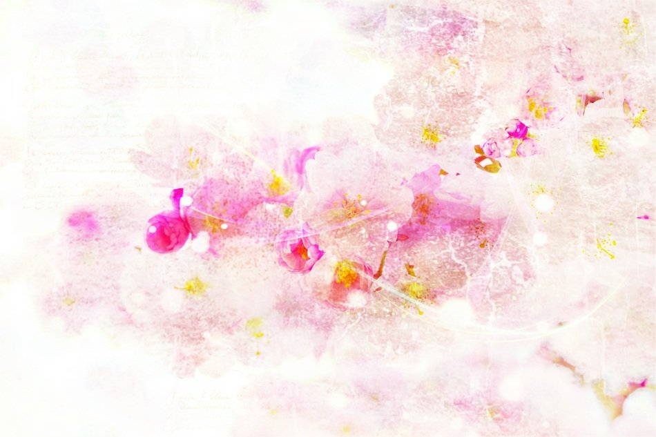 cherry blossom watercolor abstract background