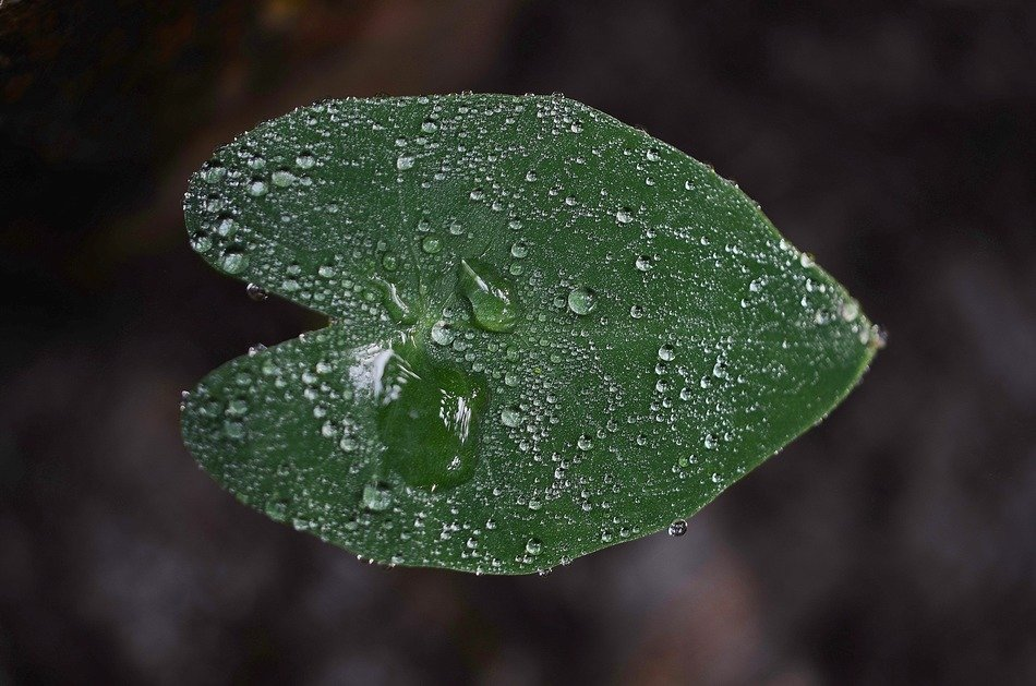 green color leaf macro drops of water