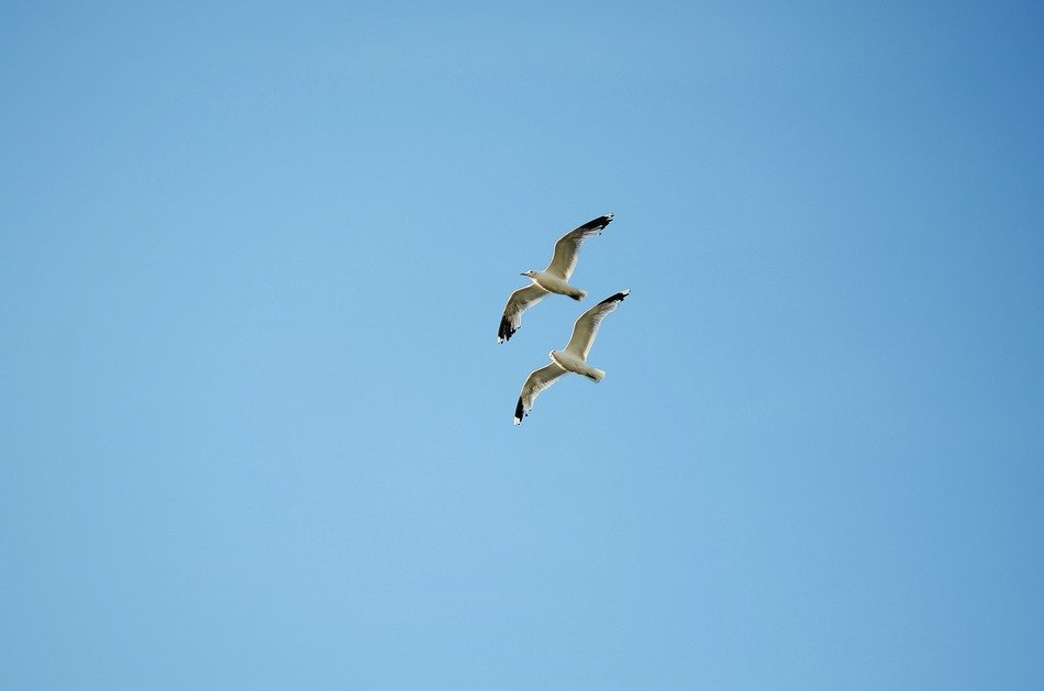 a couple of seagull birds in the blue sky