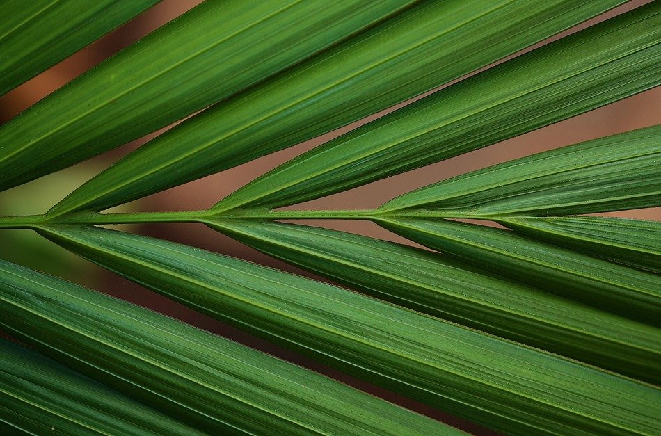 green color macro tropical leaves