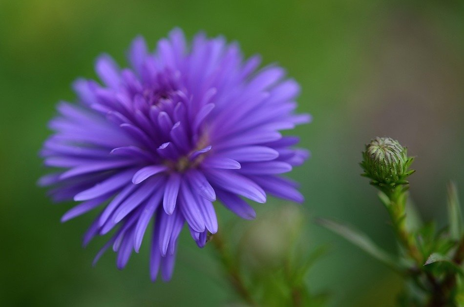 flower nature garden macro wallpaper