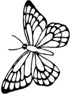 drawing white butterfly on a black background