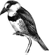 Black and white drawing of the large bird clipart