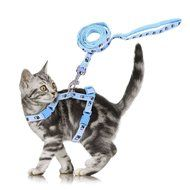 Nylon Pet Dog Cat Kitten Adjustable Harness Lead Leash Collar Belt Safety Rope N5