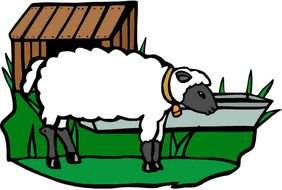 drawn farm sheep