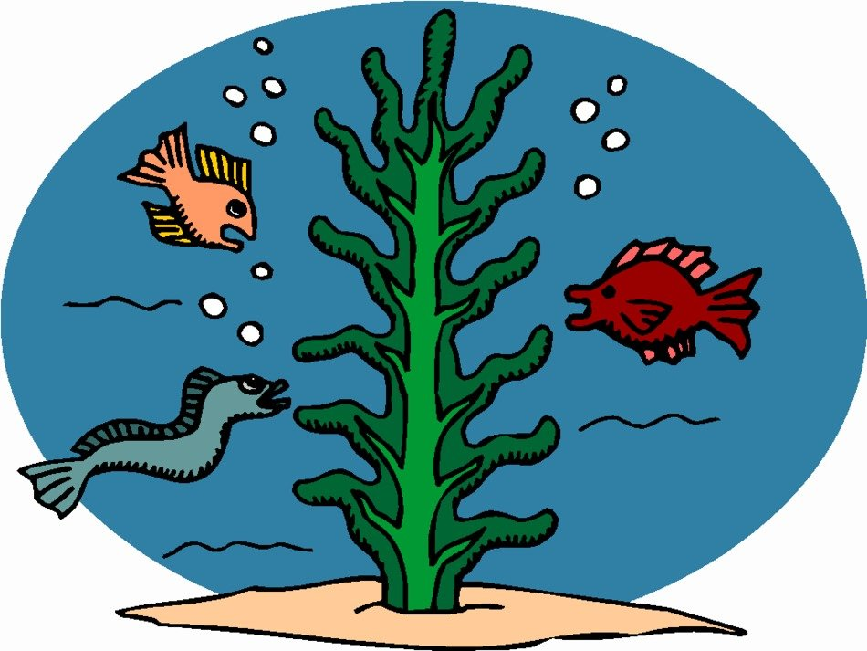 Colorful fishes near the seaweed clipart