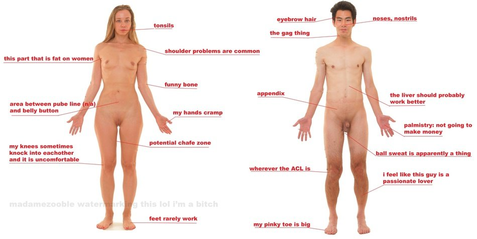 overview of human body