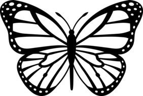 Black And White Butterfly as a illustration