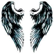 black angel wings on a white background