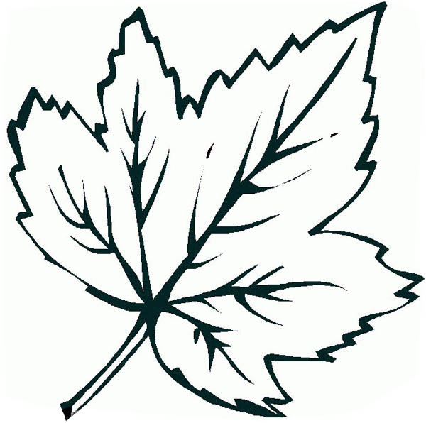 Maple Leaf Coloring Page Free Image
