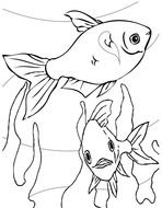 drawing of the fishes