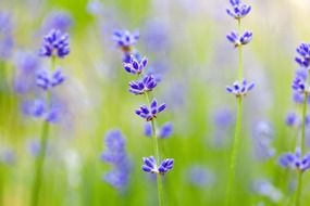 spring flowers on a blurred background