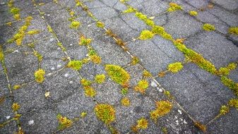 moss stone slabs weed ground