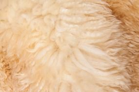 fur structure fund sheepskin