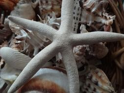 starfish star shell seashells