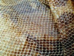 snakeskin reptile dried shedding