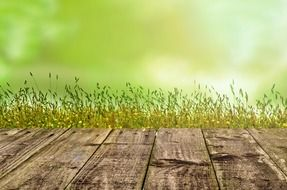background with green spring grass