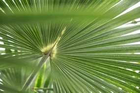 green tropical palm leaf plant