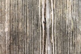 wood structure grain fibers