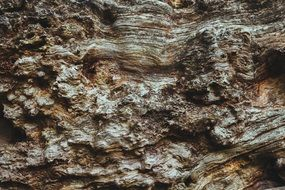 bark tree trunk texture