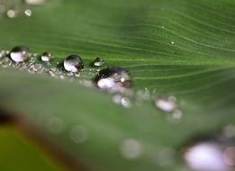 drops of dew on tropical green leaf