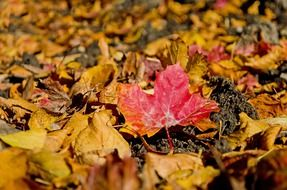 dry autumn leaves on ground